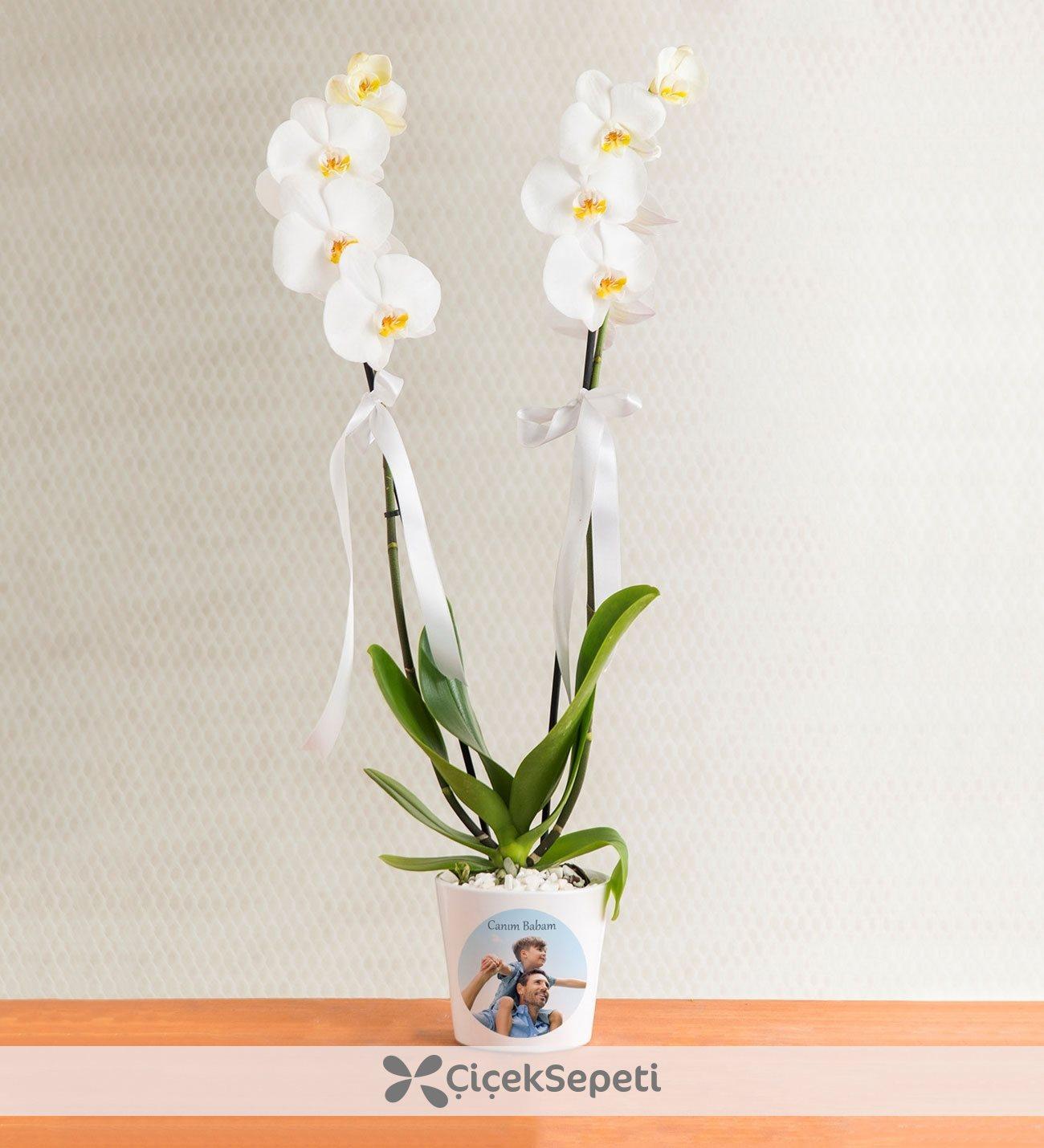 Orkide çiçek yılda birkaç kez nasıl yapılır